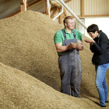 gutes Weizen- und Gerstefutter